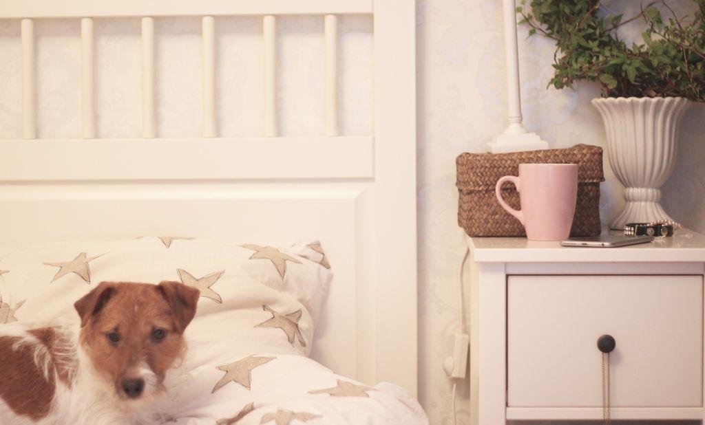 10 saker du behöver för att göra kontorsjobb från sängen en dag