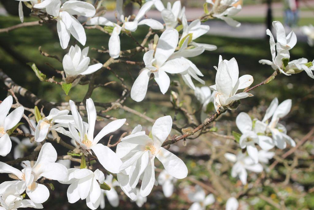 botaniska4