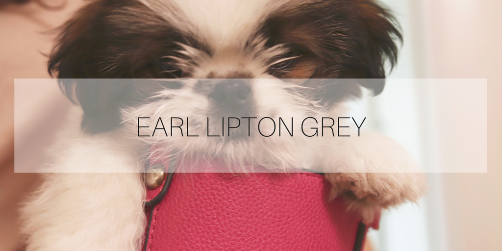 Juniorofficedog Earl Lipton Grey